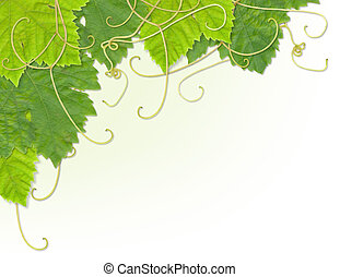 foglia acino uva, angolo