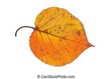 foglia autunno, bianco
