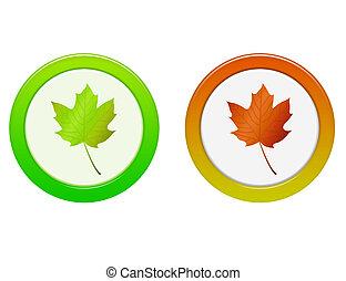 foglia, autunno, bottone