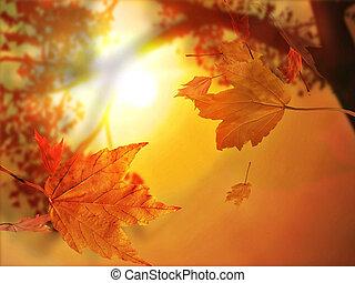 foglia, autunno, cadere
