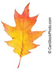 foglia autunno, colorito