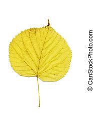 foglia autunno, giallo