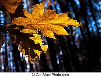 foglia, autunno, giallo