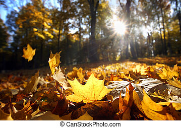 foglia autunno