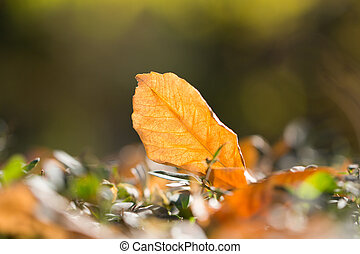 foglia autunno, natura