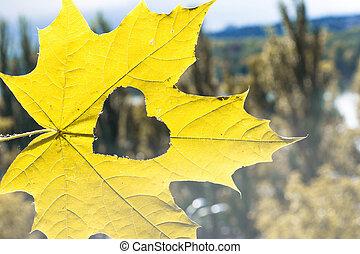 foglia, cuore, autunno