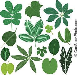 foglia, foglie, pianta, tropicale