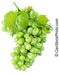 foglia, frutta, uve bianche, fresco, raccogliere