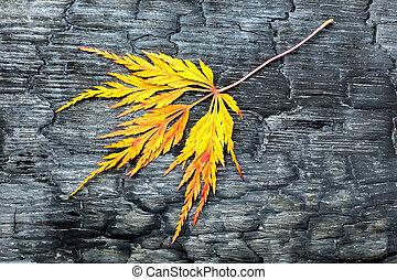 foglia, giallo, legno, nero, cadere, bruciato