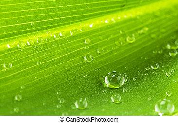 foglia, gocce, acqua verde
