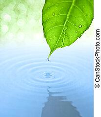foglia, goccia, acqua, verde, cadere, ondulazione