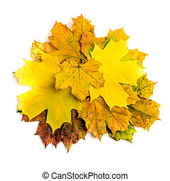 foglia, isolato, autunno, mucchio, cadere, acero
