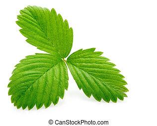 foglia, isolato, fragola, singolo, verde bianco