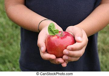foglia, mani, tenuto, bambino, mela, rosso, baluginante