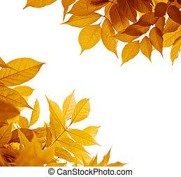 foglia marrone, arancia, foglie, autunno, fondo., colori, giallo, bianco, bordo, sopra