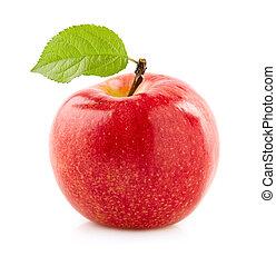 foglia, mela, rosso