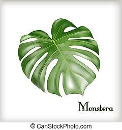 foglia, monstera, tropicale