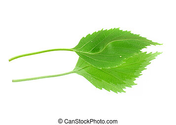 foglia, relativo, verde