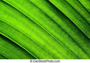 foglia, struttura, verde