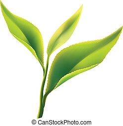 foglia, tè, sfondo verde, fresco, bianco