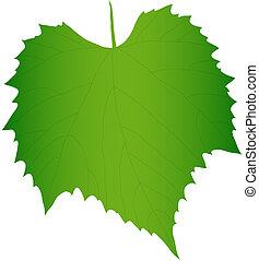 foglia, uva, verde