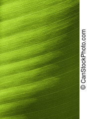 foglia verde, dettaglio