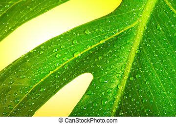 foglia verde