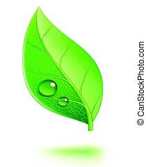 foglia verde, lucido