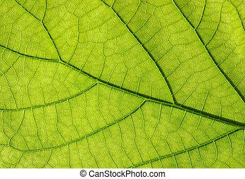 foglia, verde, struttura