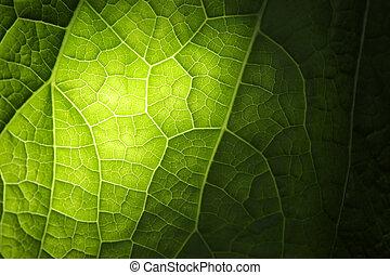 foglia verde, struttura
