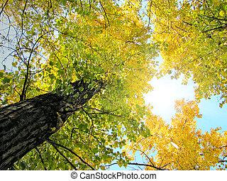 fogliame autunno