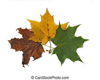 foglie, 2, tre