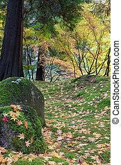 foglie, albero, acero giapponese, pietre