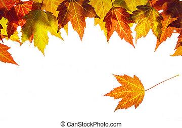 foglie, appendere, bordo, acero, cadere