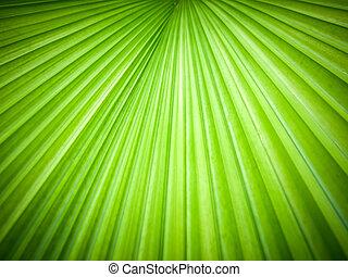foglie, astratto, immagine