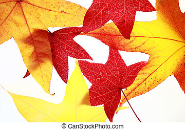 foglie, autunno