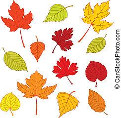 foglie, autunno, bianco