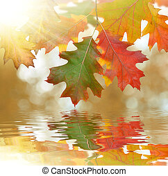 foglie, autunno, quercia