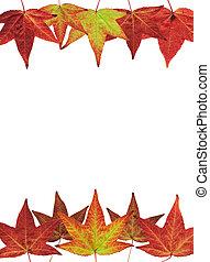 foglie, bianco, cadere