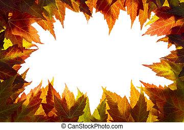 foglie, bordo, bianco, acero, cadere