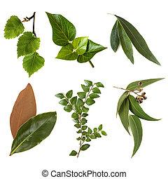 foglie, collezione, bianco, isolato