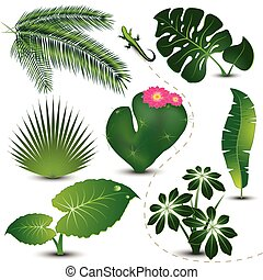 foglie, collezione, tropicale