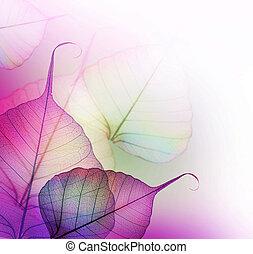 foglie, design., floreale