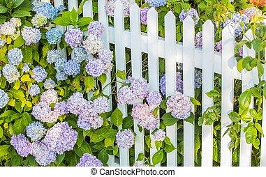 foglie, fiori, virbunum, recinto bianco