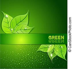 foglie, fondo, verde, gocce rugiada