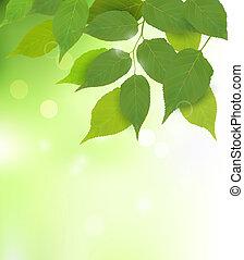 foglie, fresco, fondo, verde, natura