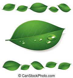 foglie, isolato, struttura, acqua, realistico, sfondo verde, bianco, gocce