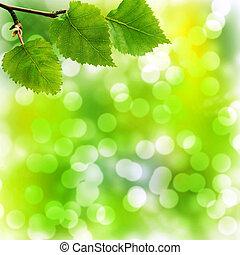 foglie, morbido, bokeh, fondo, betulla
