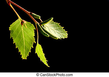 foglie, nero