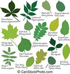 foglie, nomi, collezione